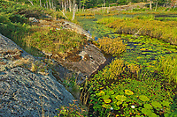 Wetland at Highland Pond<br /> Torrance Barrens Dark-Sky Preserve<br />