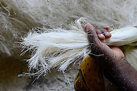 TANZANIA Tanga, Usambara Mountains, Sisal farming and industry, D.D. Ruhinda & Company Ltd., Mkumbara Sisal estate, further processing of sisal fibres, combing of fibres / TANSANIA Tanga, Sisal Industrie, D.D. Ruhinda & Company Ltd., Mkumbara Sisal estate, Weiterverabeitung der getrockneten Sisalfaser, Kaemmen der Faser