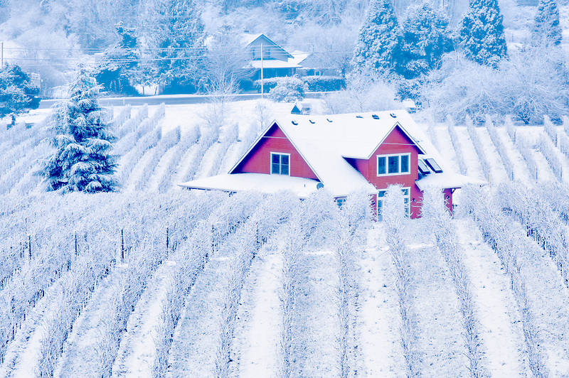 Sokol Blosser Vineyards with snow fog and farm house. Oregon