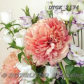 Gisela, FLOWERS, BLUMEN, FLORES, photos+++++,DTGK2174,#f#
