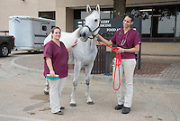 Class of 2018 student, Brittany Curtis, with patient Contessa Matilda, from the bloodline of champion horse Secretariat.