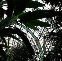 Tropical Rainforest Glasshouse (formerly Le Jardin d'Hiver or Winter Gardens), 1936, René Berger, Jardin des Plantes, Museum National d'Histoire Naturelle, Paris, France. View from below of Tropical foliage and the glass and metal roof of the Art Deco style structure.
