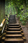 Wooden steps on a trail. Lynn canyon park North Vancouver, British Columbia, Canada.