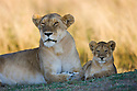 Lion (Panthera leo) mother and cub, portrait, Maasai Mara, Kenya