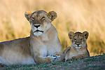 Lion (Panthera leo) mother and cub, portrait, Maasai Mara, Kenya