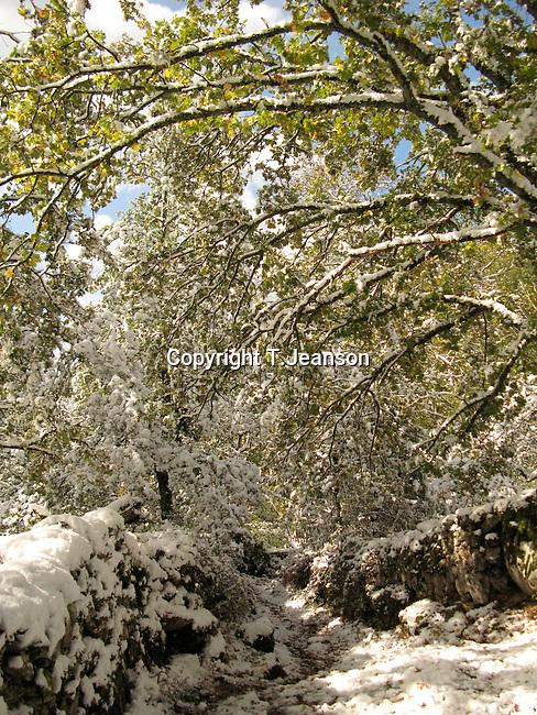 Corsica under snow in october