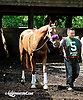 Flash Forward before The Obeah Stakes (gr 3) at Delaware Park racetrack on 6/14/14