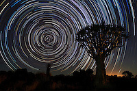 Quiver tree (Aloe dichotoma) and Star Trails