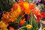Diverse Floral & Garden Images