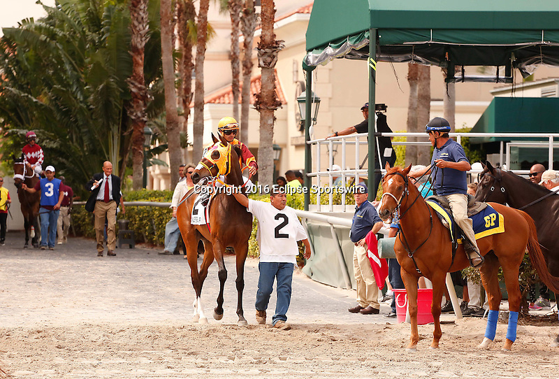 HALLANDALE BEACH, FL - FEBRUARY 18: #2 Curlins Approval  ridden by Luis Saez stepping onto the track for the post parade before winning the Royal Delta Stakes (G2), at Gulfstream Park, Hallandale Beach, FL. (Photo by Arron Haggart/Eclipse Sportswire/Getty Images)