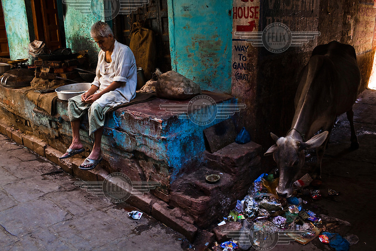 A vendor sits outside his house while a cow digs through the pile for food in the ancient city of Varanasi.