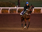 OCT 24: Breeders' Cup Dirt Mile entrant Blue Chipper, trained by Kim Young Kwan, gallops at Santa Anita Park in Arcadia, California on Oct 24, 2019. Evers/Eclipse Sportswire/Breeders' Cup