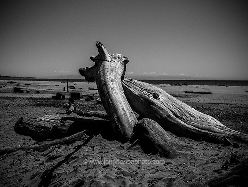 Driftwood on Seacliff State Beach, Aptos, California