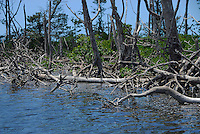 Flamingo Coastline, Everglades National Park, Mangroves, Ten Thousand Islands, South Florida<br />