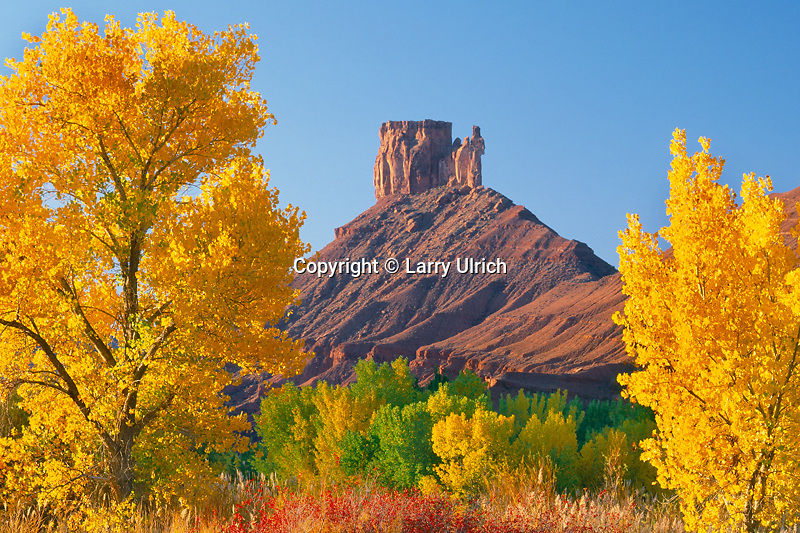 Fremont cottonwoods frame<br />