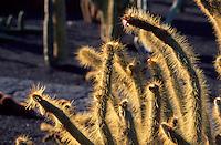 Spanien, Kanarische Inseln, Lanzarote, Kaktusgarten von Cesar Manrique in Guatiza