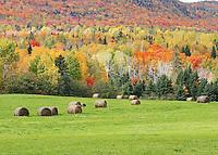 Autumn Round Bales  #L61