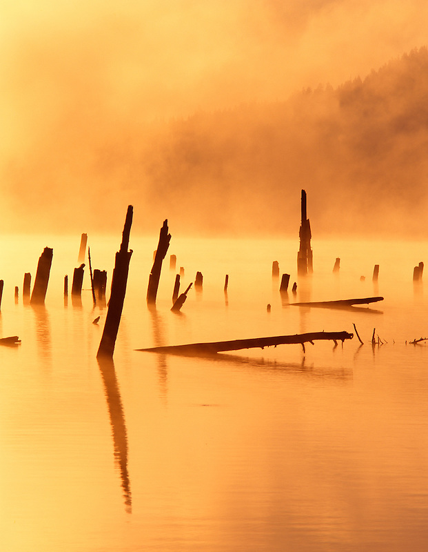 Dead trees and fog at Craine Prairie Reservoir. Oregon.