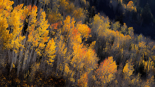 Fall foilage has arrived in the Dixie National Forest in Southern Utah