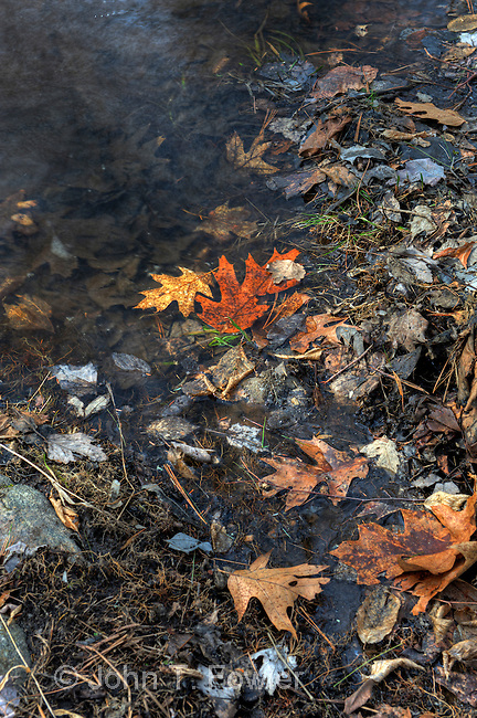 Water on Forest floor in early spring