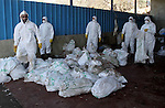"Palestinian workers, wearing protective gear, back dead turkeys in plastic bags at a live-poultry farm in the West Bank village of Serees, southern Jinin January 21, 2015. A flock of 17,000 turkeys has been diagnosed with the H5N1 ""bird flu"" virus in Jinin. The veterinary department of the Palestinian Authority Agriculture Ministry said it had managed to prevent an epidemic. Photo by Nedal Eshtayah"
