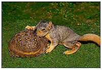 Squirrel and turtle hug in mossy garden