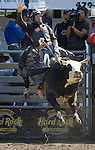 Fred Boettcher, from rice lake, WI.,  tries to hang onto Funny Farm during the Xtreme Bull Riding Competition at the Kitsap County Fair and Stampede  held Aug. 26 to Aug. 30, 2009 in Silverdale, WA. Jim Bryant Photo. All Right Reserved. © 2009