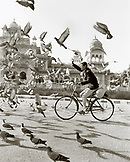 INDIA, Jaipur, man riding bicycle through a flock of pigeons (B&W)