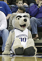06 December 2008:  Washington Huskies mascot Harry watches from the floor against Texas Southern at the Bank of America Arena at Hec Edmundson Pavilion in Seattle, WA.  Washington won over Texas Southern.