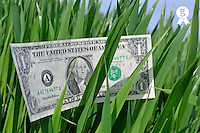 One US dollar banknote on grass (Licence this image exclusively with Getty: http://www.gettyimages.com/detail/81867342 )