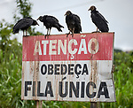 "A roadside sign asking drivers to stay in their lane, literally to ""stay in single file,"" near Anapu, Brazil. The buzzards are modeling the correct behavior."