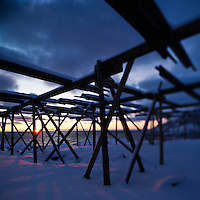 Winter sun silhouettes empty stockfish drying racks, Lofoten Islands, Norway