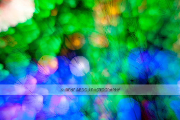 "At a holiday light display (Brookside Gardens Garden of Light in Wheaton, Maryland), patterns of light are created by ""de-focusing"" the camera."
