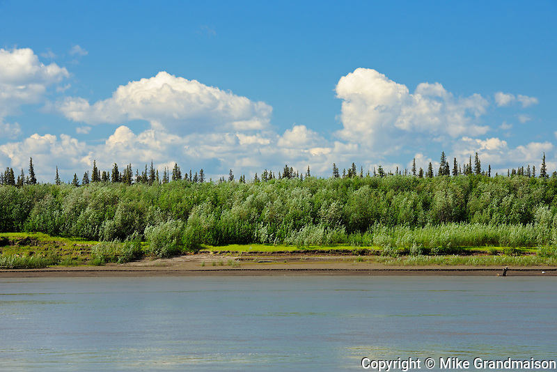 Boreal forest along the Peel River. About 180 kms south of Inuvik<br /> Dempster Highway<br /> Northwest Territories<br /> Canada