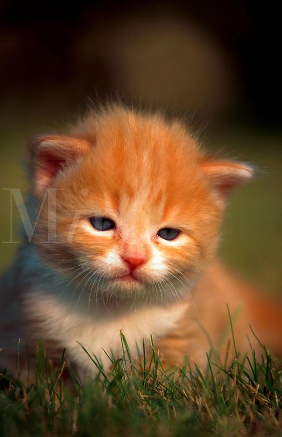 Portrait of a tiny little kitten in grass, looking a bit sad.