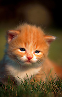 Portrait of a tiny little kitten in grass, looking a bit sad.