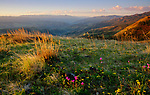 Idaho, North Central, White Bird. A spring morning with wildflowers on a ridge overlooking the Salmon River and canyon near White Bird, Idaho.