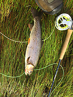 This Norfolk Bonneville cutthroat was caught by Clay Henry.