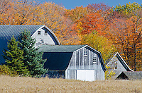 Barns are framed by fall colors in a forest and grasslands, near Newport State Park, Door County, Wisconsin