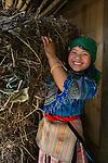 Ethnic Hmong woman collecting firewood, Sapa, Vietnam