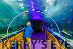 Kevin Flannery, Director of Dingle OceanWorld Aquarium
