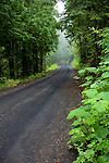 Skyline Drive in Mary McCroskey State Park, Idaho, follows the forested ridgeline for 25 miles. Seen here descending into fog after as fresh rain.