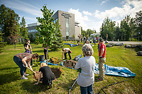 Volunteers plant trees in front of the ConocoPhillips Integrated Science Building during a belated Arbor Day volunteer tree-planting event to honor UAA's 10 years as a certified Arbor Day Foundation Tree Campus.