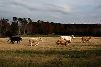 Ohio, Usa. 27. Oktober 2016. Landskapet i Appalachene. Fotografier til dokument om valget i Usa og Appalachene. Foto: Christopher Olssøn