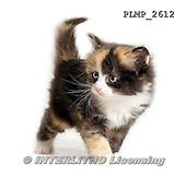 Marek, ANIMALS, REALISTISCHE TIERE, ANIMALES REALISTICOS, cats, photos+++++,PLMP2612,#a#
