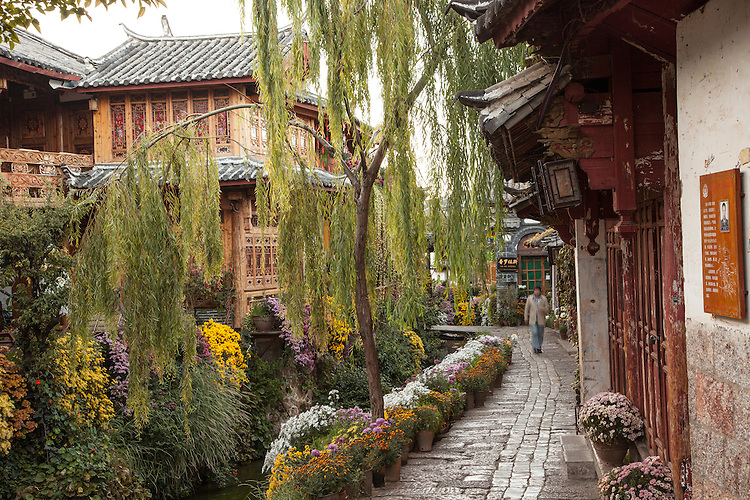The waterways of Lijiang old town come alive with flower bloom in October