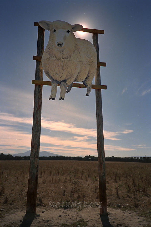 Sheep sign in middle of paddock, near Christchurch.