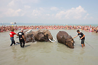 Rene Caselly (2nd L) and Rene Caselly Jr. (R) of Germany splash water on circus elephants of the Caselly Family as they take a bath in lake Balaton in promotion of the Circus Night event at Balatonlelle (about 140 km South-West of capital city Budapest), Hungary on July 18, 2015. ATTILA VOLGYI