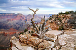 Yaki Point Overlook, South Rim View, Grand Canyon National Park, Arizona, USA