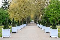 France, Indre-et-Loire (37), Chenonceaux, château et jardins de Chenonceau, la grande allée bordée de platanes puis de bacs et ifs taillés en pyramide